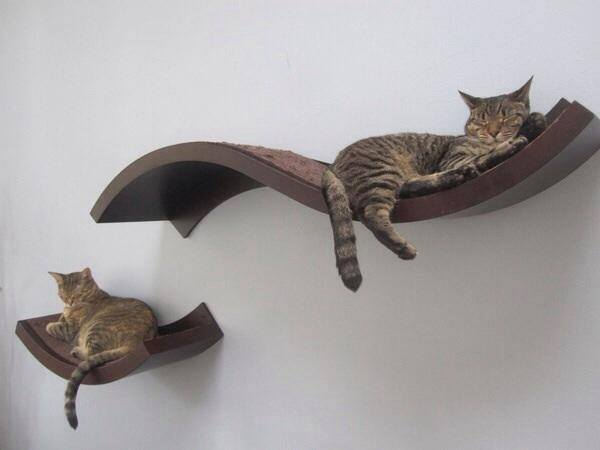 Idées et astuces pour Chiens et chats! 11855812