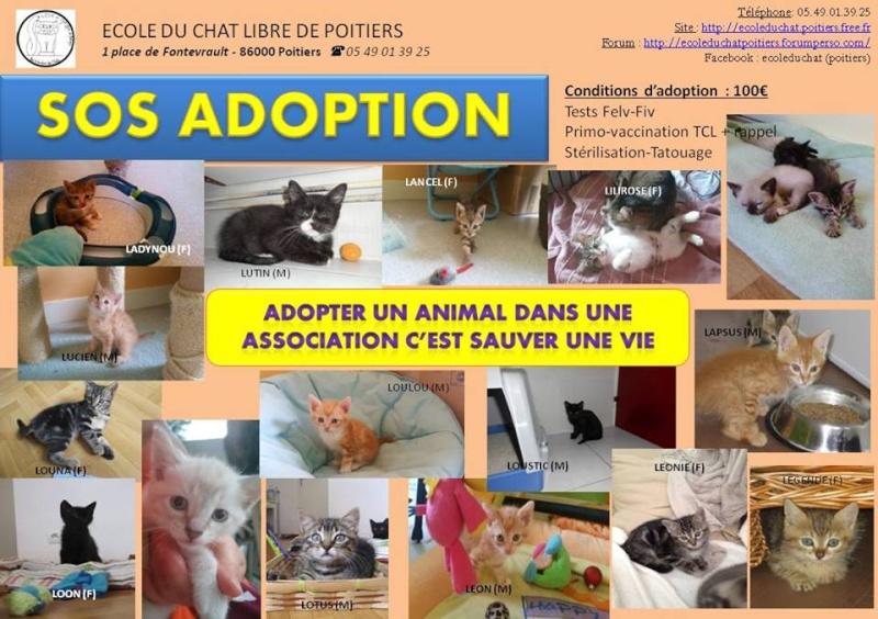 SOS adoption été 2015 11707610