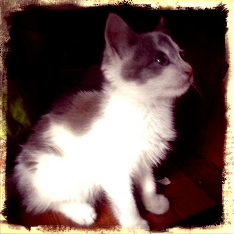 LULUBELLO (mi mai 2015) blanc et gris Lullub10