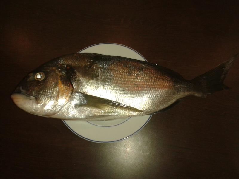 poisson de saison 00311