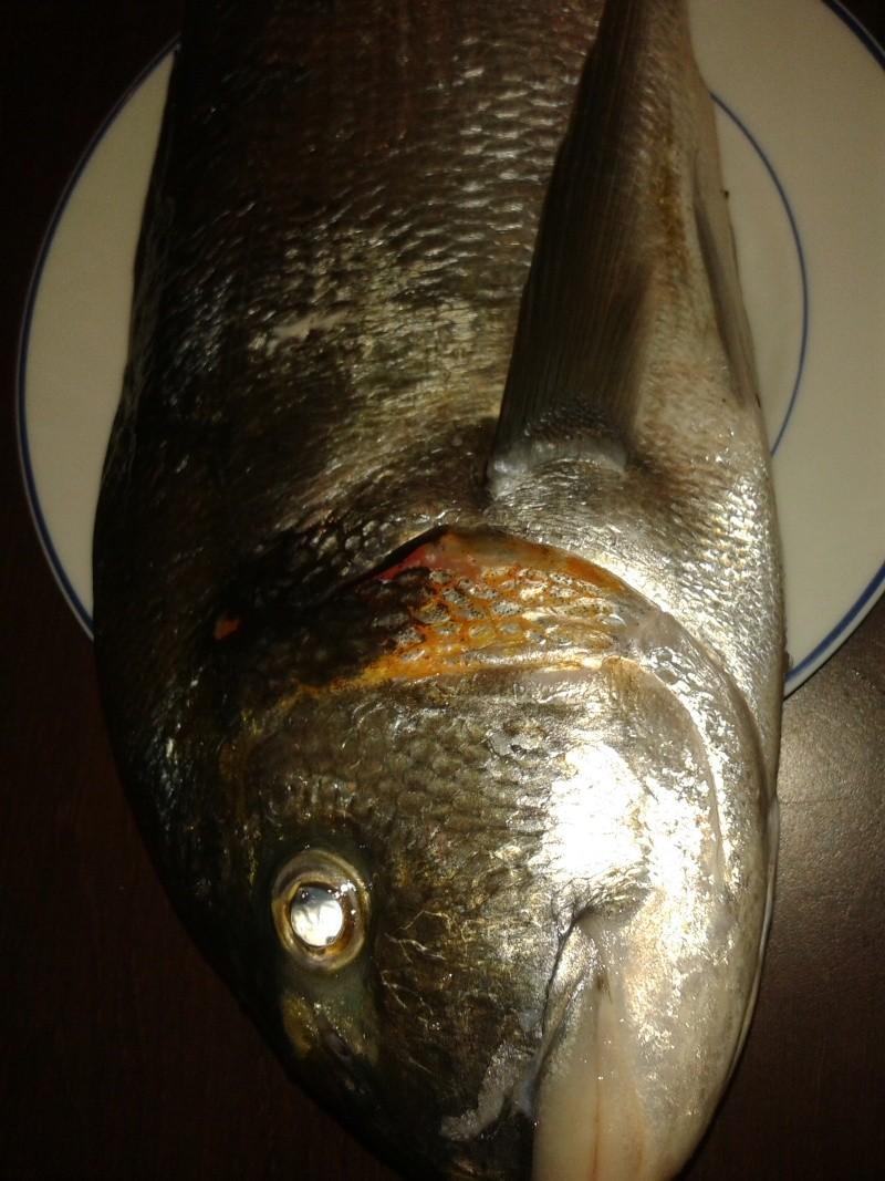 poisson de saison 00410