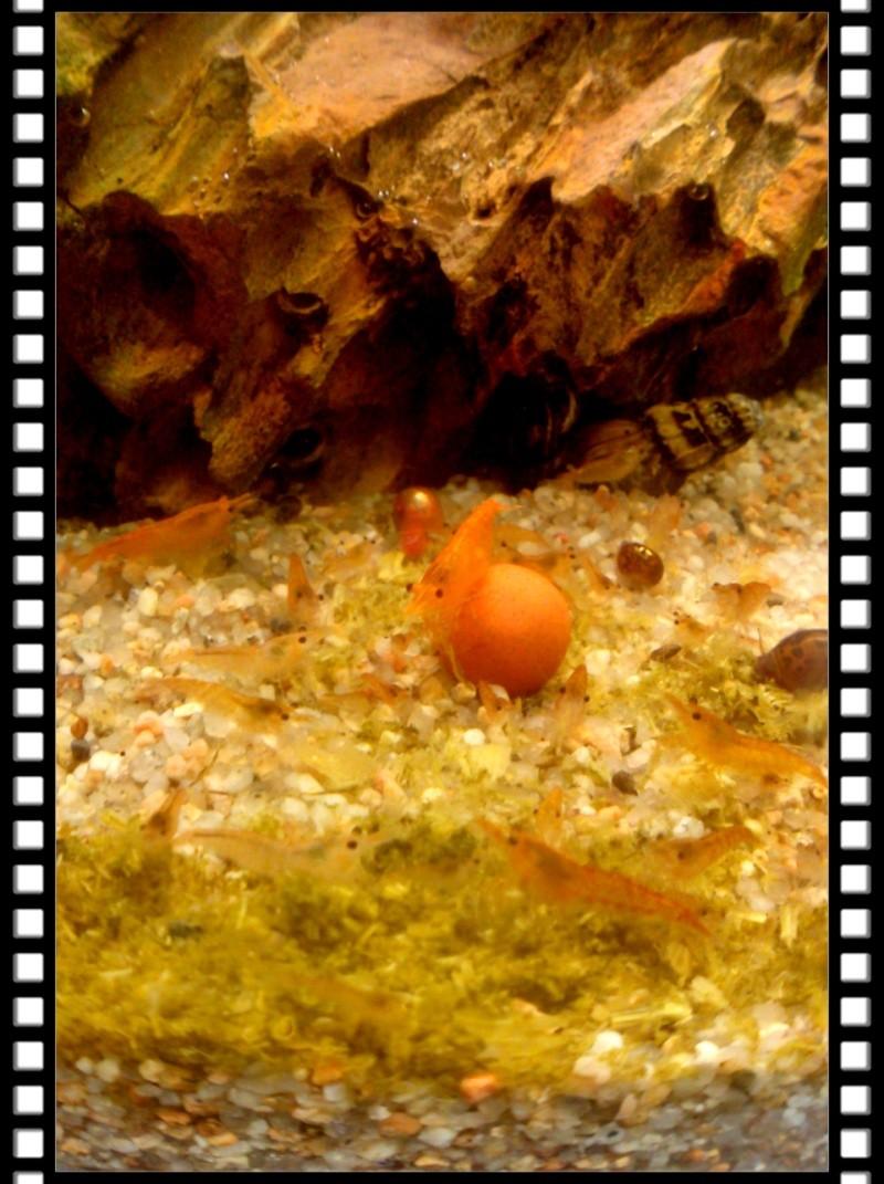 Gozgull Shrimp's - Page 8 Img_2020