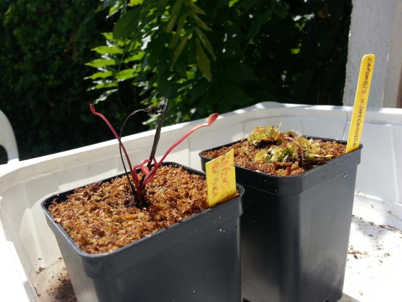Carniplants 20150711