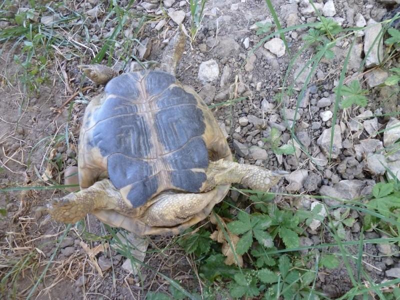 Est ce un mâle ou une femelle P1000417