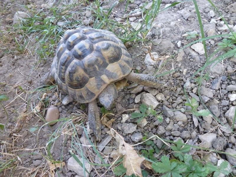 Est ce un mâle ou une femelle P1000419