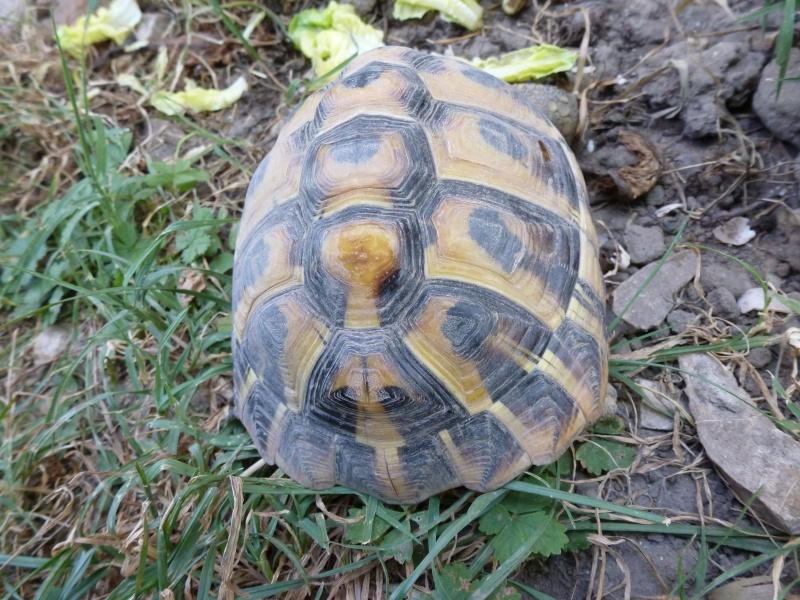 Est ce un mâle ou une femelle P1000422