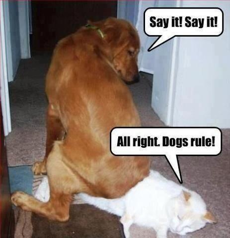 Laughter Is The Best Medicine - Page 6 Dogs_r10