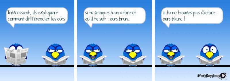 Encore quelques Birds ? Bird1210