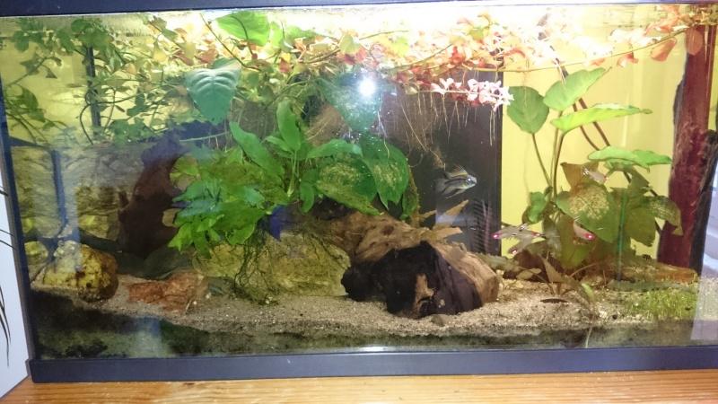 eclairage d'un aquarium par led quelle puissance? Dsc_0711
