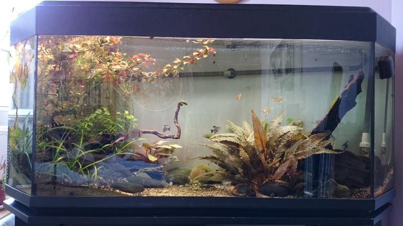 Eclairage D Un Aquarium Par Led Quelle Puissance
