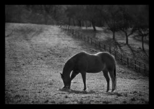 Weißes Pferd war bei mir - wir dachten, sprachen und fühlten zusammen Silice10