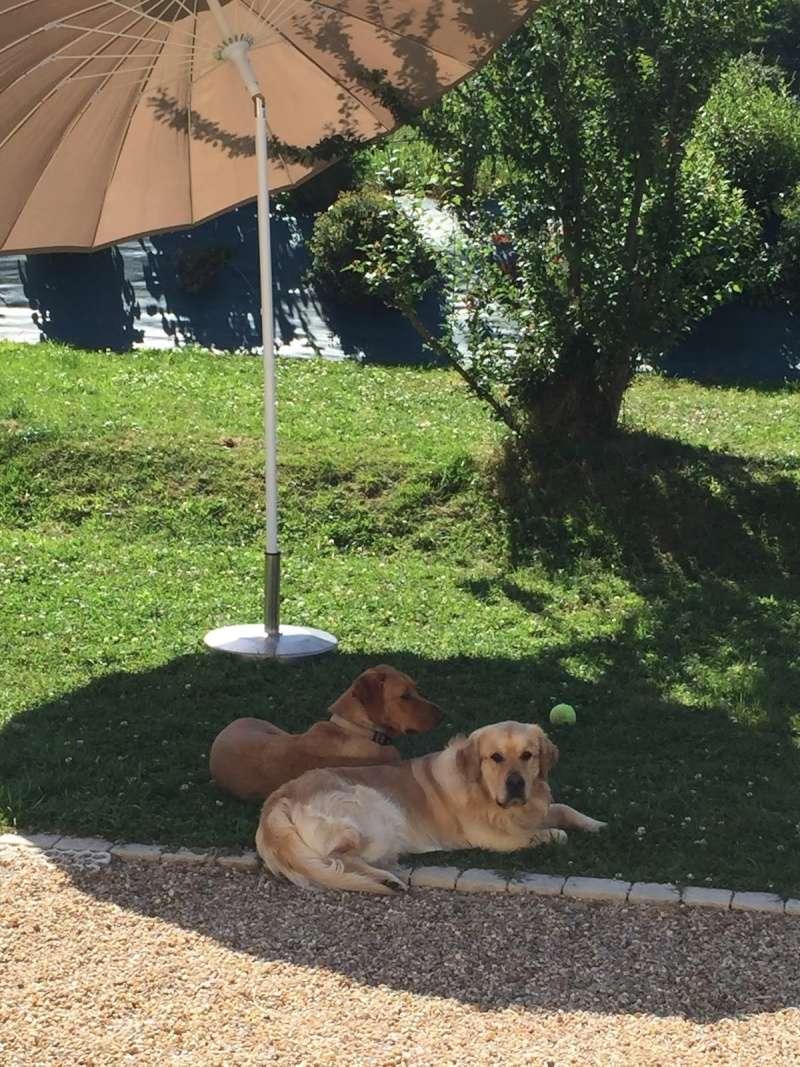 La chaleur, la canicule et vos chiens - Page 4 Dscf5210