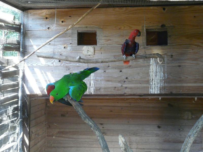 Visite d'un élevage de perroquets. P1160418