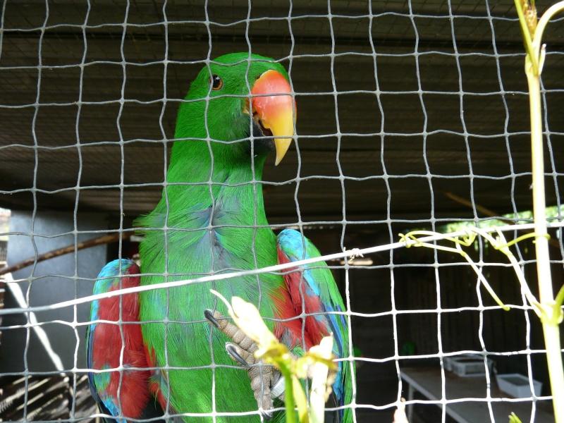 Visite d'un élevage de perroquets. P1160419