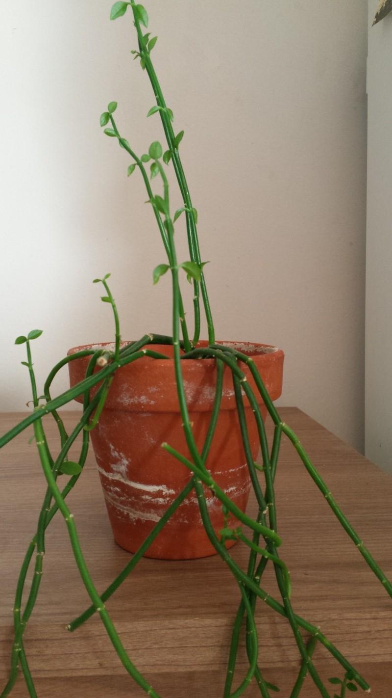 Identification de plante - besoin de votre aide SVP  Plante23