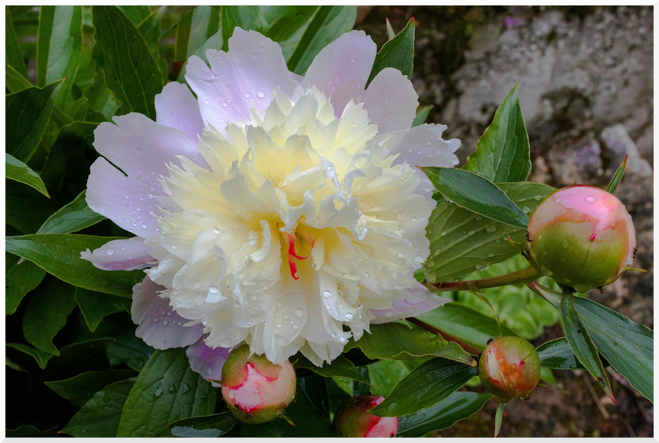 fleur_13.jpg
