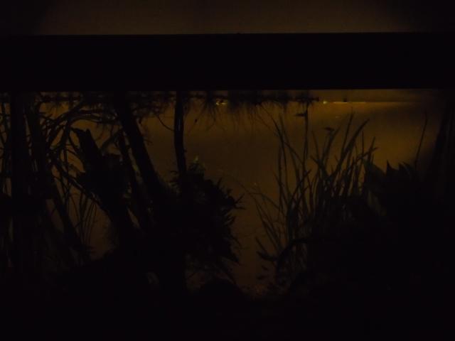 Un petit bout d'Amazonie Dsc00712