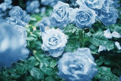 [Pullips] ♦Au coeur du Rosier Bleu♦ Nouvelles photos p.2 69074-11