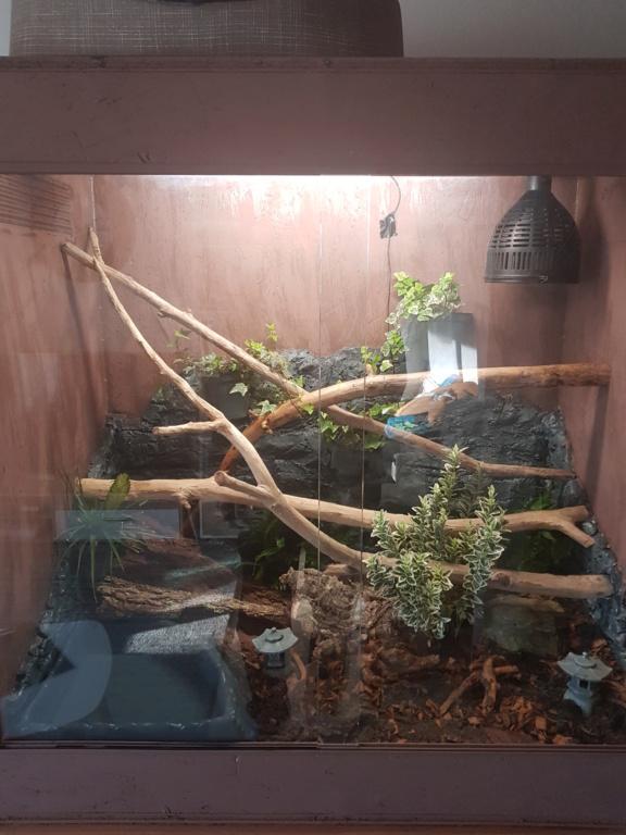 Aide pour chauffer mon terrarium 20200210