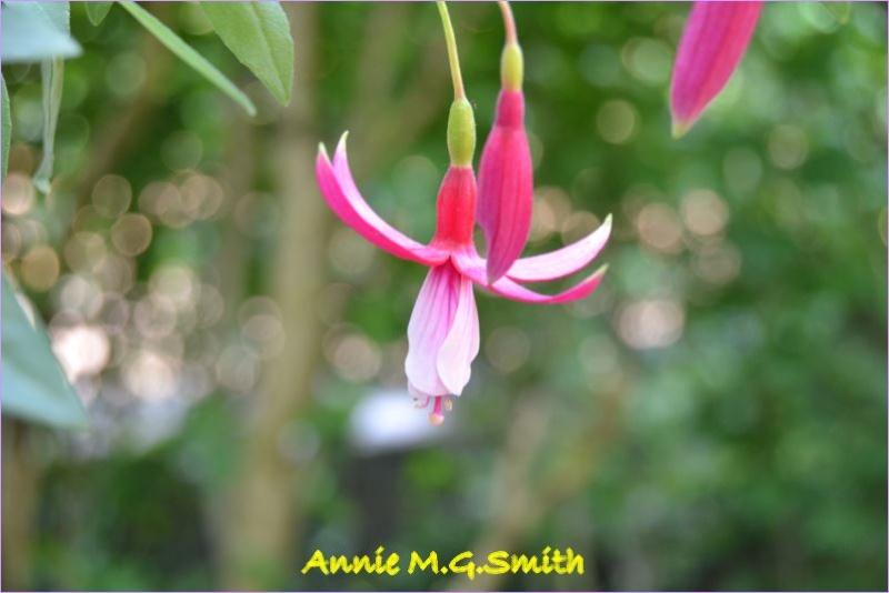 premieres fleures Annie_10