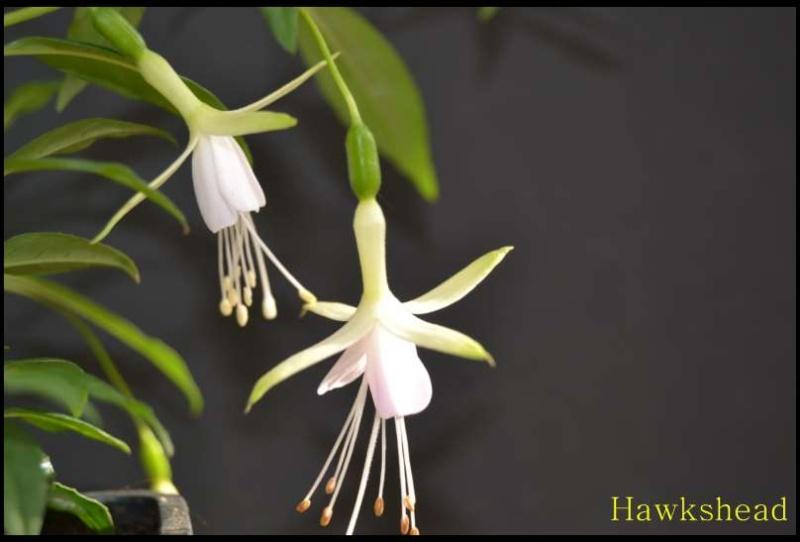 premieres fleures Recept12