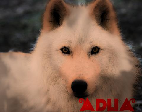 """Adlia """" Red """" Arctic10"""