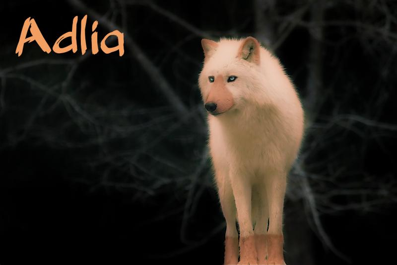 """Adlia """" Red """" Lobo-b11"""