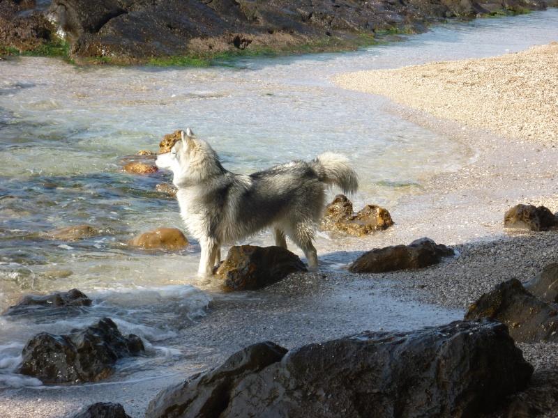 Inook des Loups des Guarrigues du Canebas P1040410