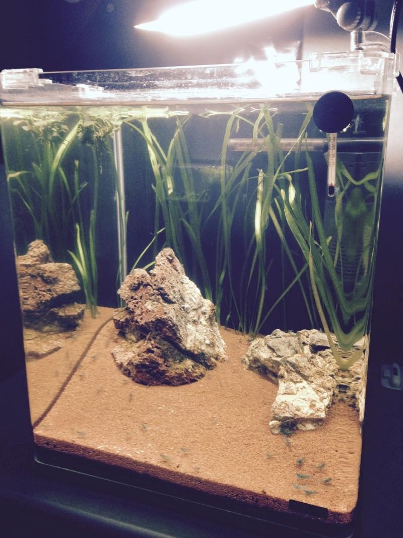 Nano 30L crevettes Image510