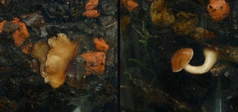 Orchideen in Glasvase 3 2015_010