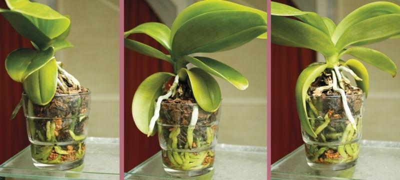 Orchideen in Glasvase 3 - Seite 3 2015_013