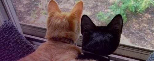 Amitié entre un mâle et une femelle [PV Shimi] Lokiju10