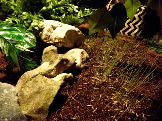 Micro-faune du terrarium... Dscf3710