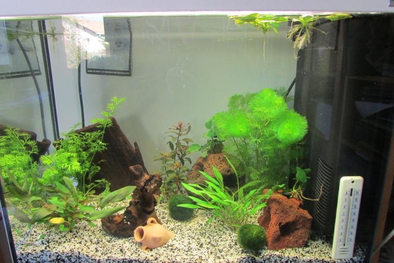 Aquarium de Protector Aquari10