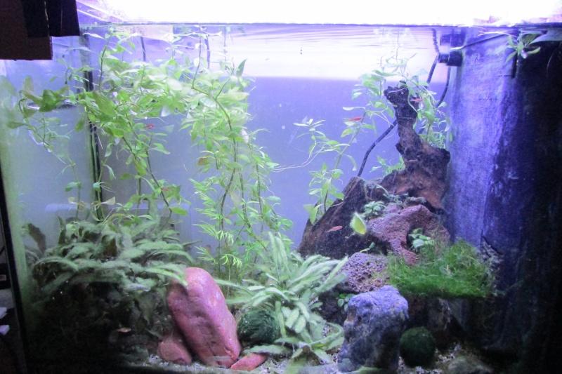 Aquarium de Protector Img_2410