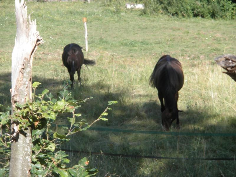 HAVANE - OI poney  née en 1995 - adoptée en mars 2014 par dona carlota - Page 2 P7120013