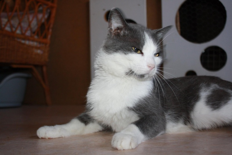 Lancelot, mâle, 01.07.2013, bleu et blanc Lancel22