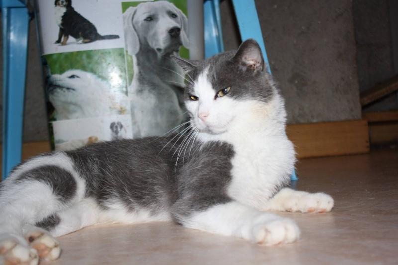 Lancelot, mâle, 01.07.2013, bleu et blanc Lancel23