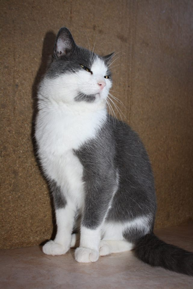 Lancelot, mâle, 01.07.2013, bleu et blanc Lancel25