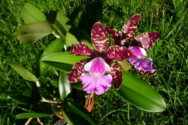 Orchideen-Neuzugang - Seite 6 P1310911
