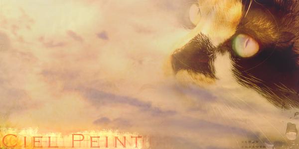 Ciel Peint || Guerrière du Clan de l'Ombre || Libre Avecec10