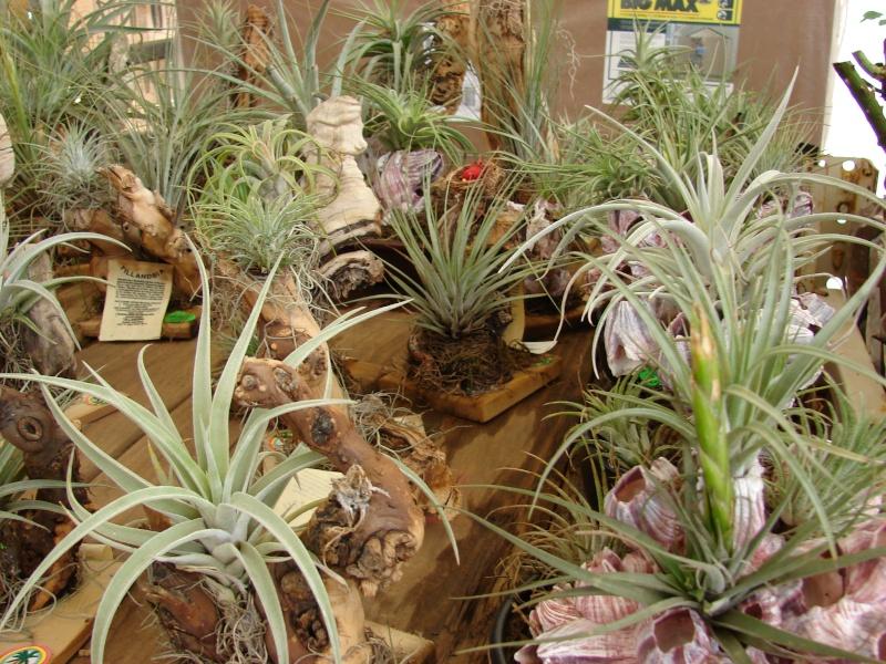 Par quoi remplacer les fausses plantes moches ? Starr_10