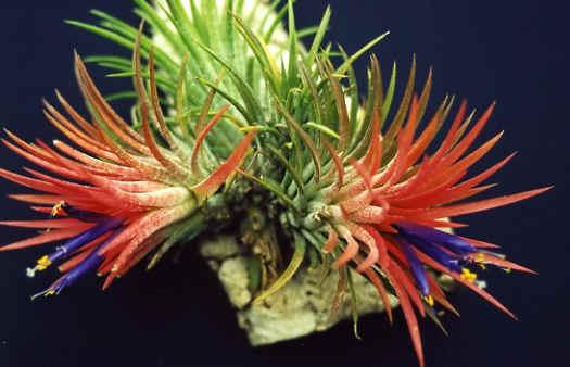 Par quoi remplacer les fausses plantes moches ? Tillan10