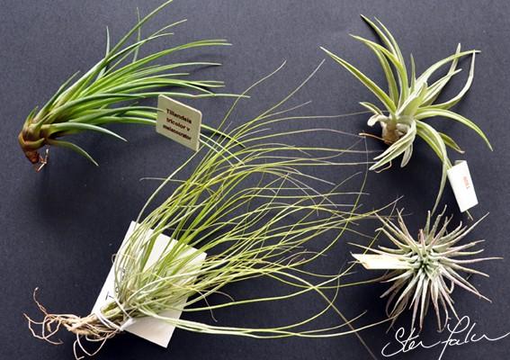 Par quoi remplacer les fausses plantes moches ? Tillan12