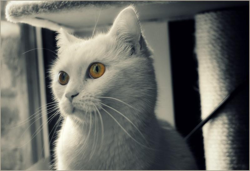 PRINCESSE, chatte née en 2010 env. (CARMINA) En FA chez Yas.h (Belgique) Dsc_0710