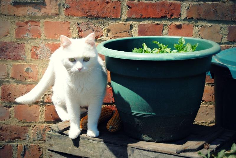 PRINCESSE, chatte née en 2010 env. (CARMINA) En FA chez Yas.h (Belgique) Dsc_0717