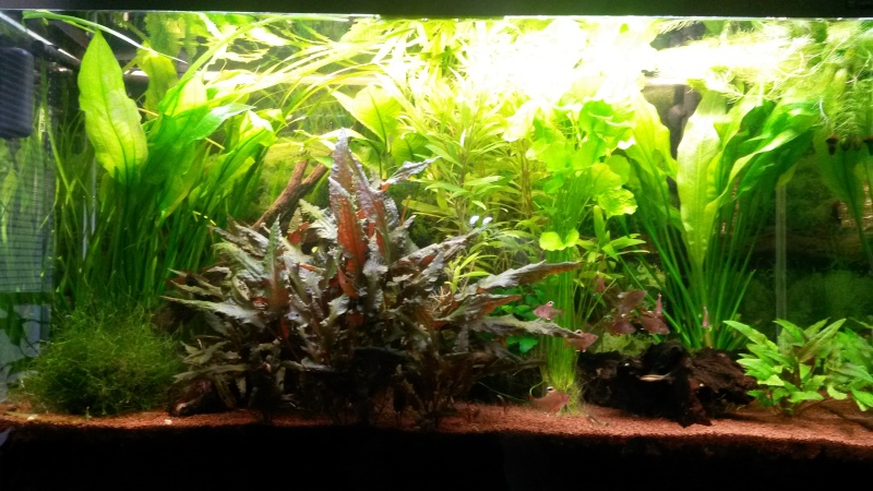 Aquarium déséquilibré ! Aquari10
