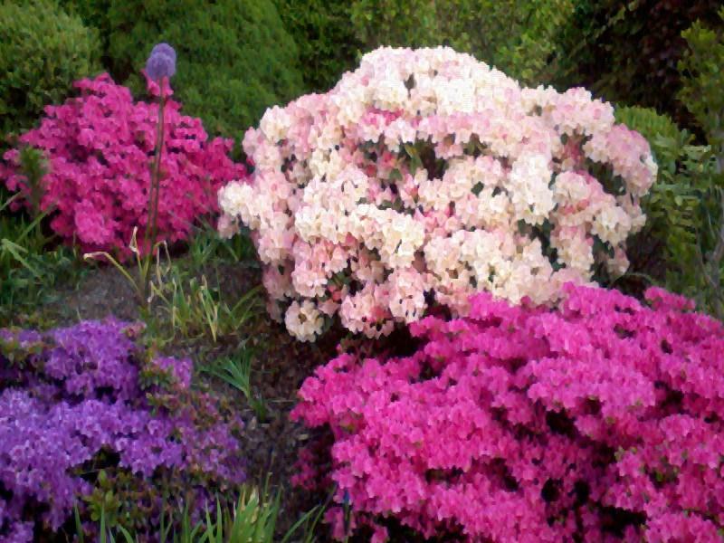 ein Blick in meinen Garten (agavenroland) Foto1211