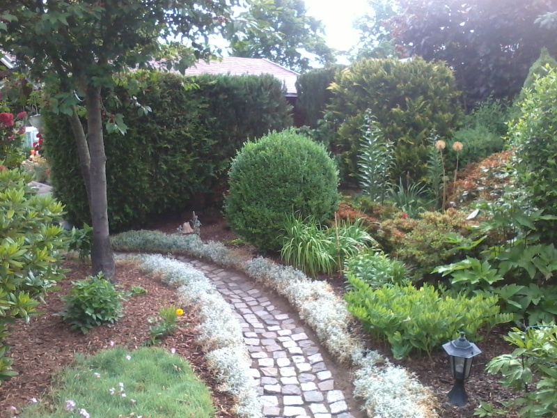 ein Blick in meinen Garten (agavenroland) Foto1323