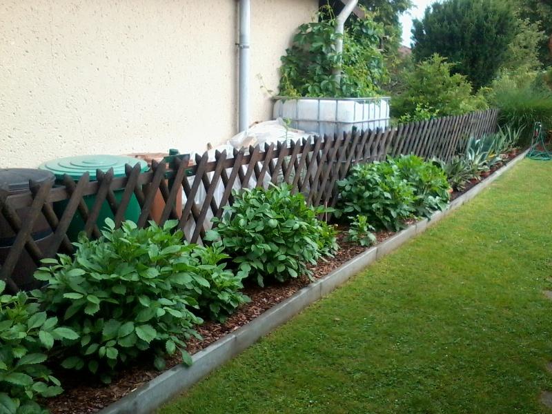 ein Blick in meinen Garten (agavenroland) Foto1324